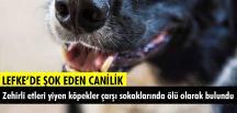 Bu Caniliğe Bir Dur Denmeli! Lefke'de köpek katliamı