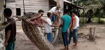 Köylüler Çok Acıkınca Dev Pitonu Yediler