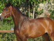 Atlar kesilip etleri satılıyor