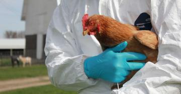 Rus Bilim İnsanları, Kuş Gribinin İlk Kez İnsana Bulaşan Türü Tespit Edildi
