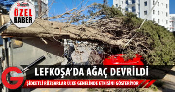 Lefkoşa'da ağaç devrildi