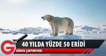 Arktik Deniz Buzu son 40 yılda yüzde 50 eridi